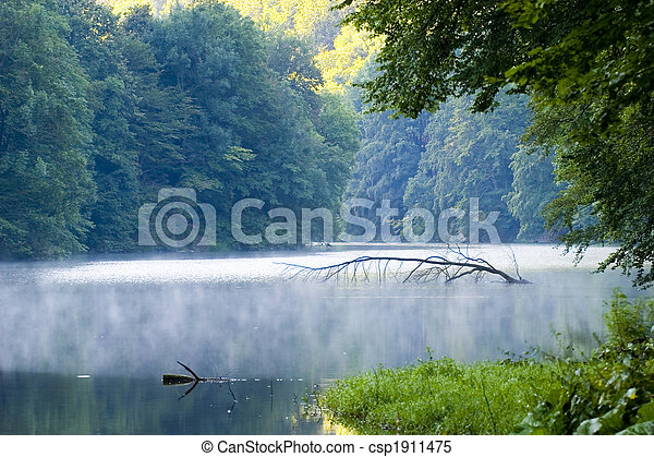 abstract, background, beautiful, beauty, botany, branches, bright, clean, day, environment, fog, foliage, forest, fresh, glow, grass, green, growth, hungary, impassable, lake, leaves, lush, magic, natural, nature, organic, outdoors, peace, plants, reflections, river, scenic, spring, summer, sunlight, sunny, tranquil, tree, tropical, water, waterfall, waves, wild, woods - csp1911475
