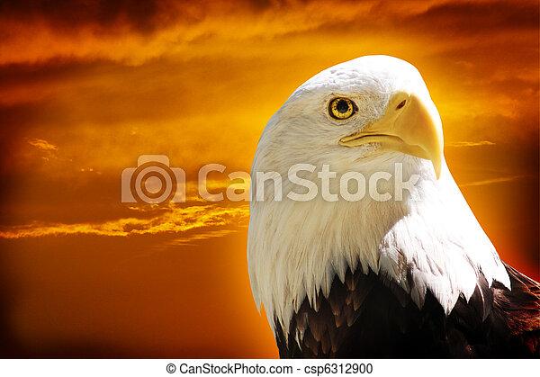 American Bald Eagle - csp6312900