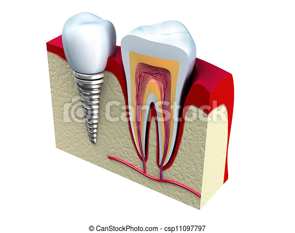 Anatomy of healthy teeth - csp11097797