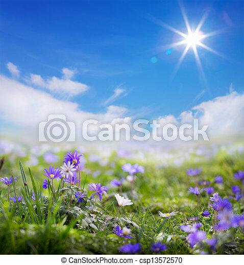art floral spring or summer background - csp13572570