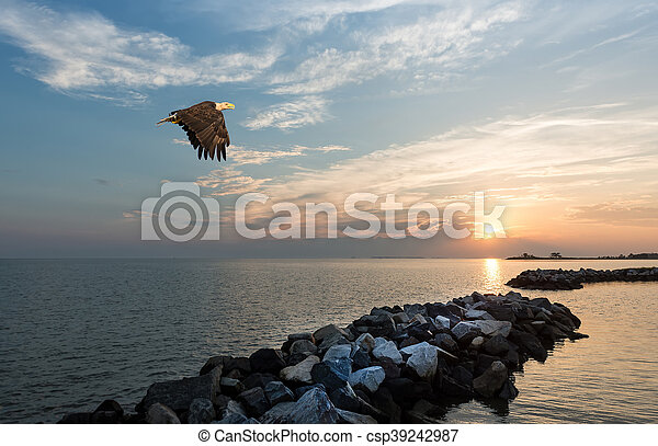 Bald Eagle flying over a jetty at sunset - csp39242987