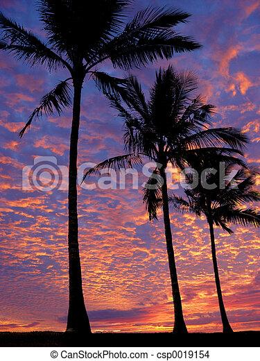 Beach at sunset - csp0019154