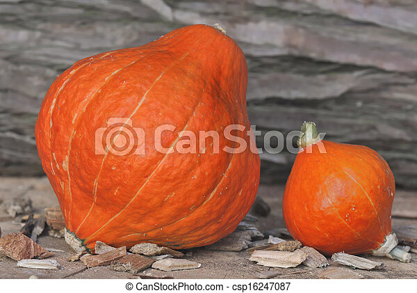 big and little pumpking - csp16247087