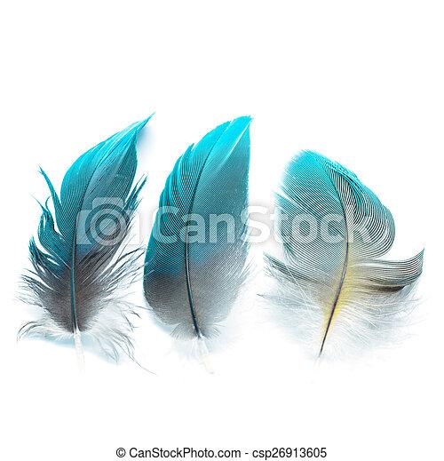 bird feathers ioslated - csp26913605