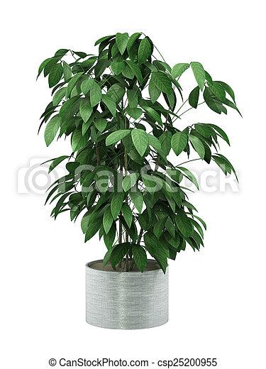 bush plant - csp25200955