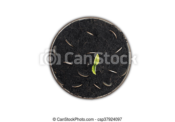 Coins in soil with young plant. - csp37924097