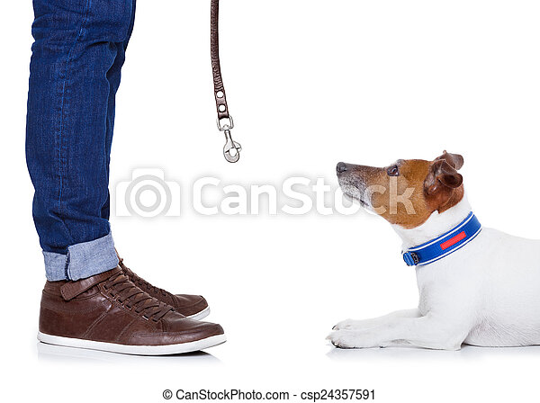 dog and owner - csp24357591
