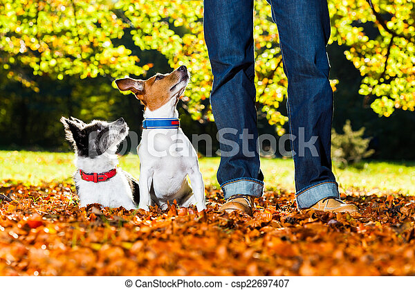 dogs and owner - csp22697407