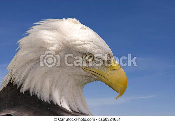 Eagle - csp0324651