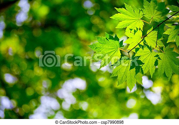 Environment background - csp7990898