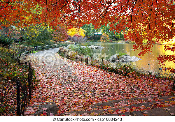 Fall Leaves in Central Park New York - csp10834243