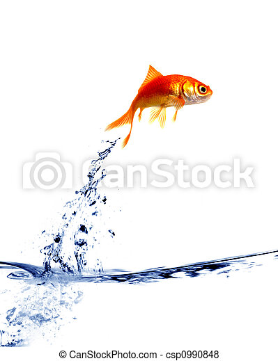 goldfish jumping out of the water - csp0990848