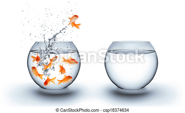 goldfish jumping out of the water - csp18374634
