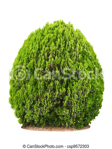 Green beautiful bush - csp9572303