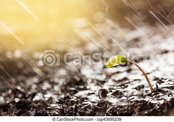 Green sprouts in rain and yellow tones with sun rays - csp43695239