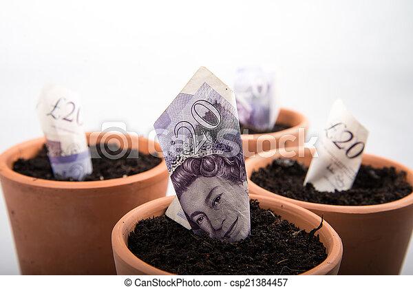growing money in pot - csp21384457