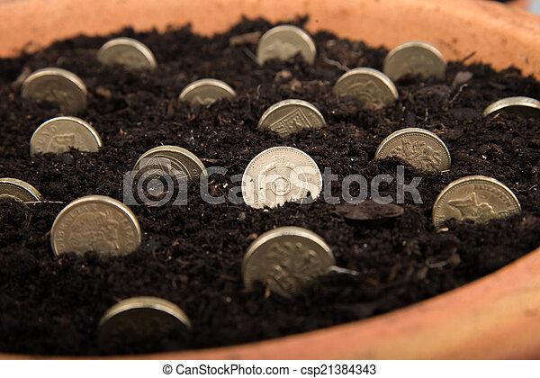growing money in pot - csp21384343