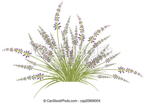 Lavender Flower Bush - csp20806004