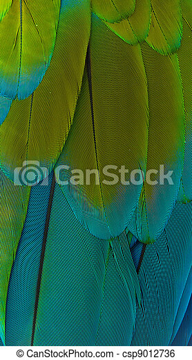 Macaw feathers - csp9012736