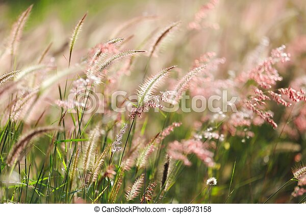 meadow under sunlight - csp9873158