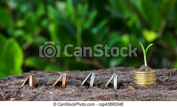 Money growth, seedling. concept coins in soil - csp43893348