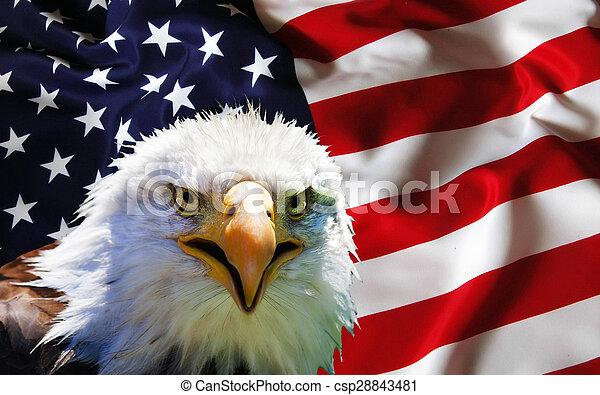 North American Bald Eagle on American flag - csp28843481
