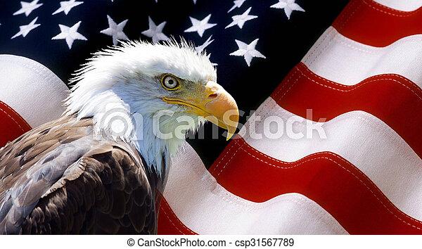 North American Bald Eagle on american flag - csp31567789