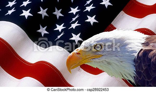 North American Bald Eagle on American flag - csp28922453