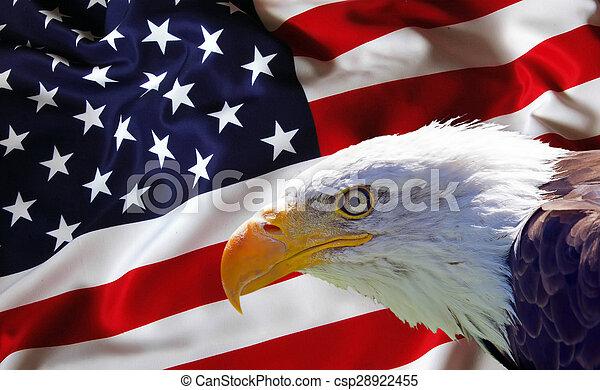 North American Bald Eagle on American flag - csp28922455