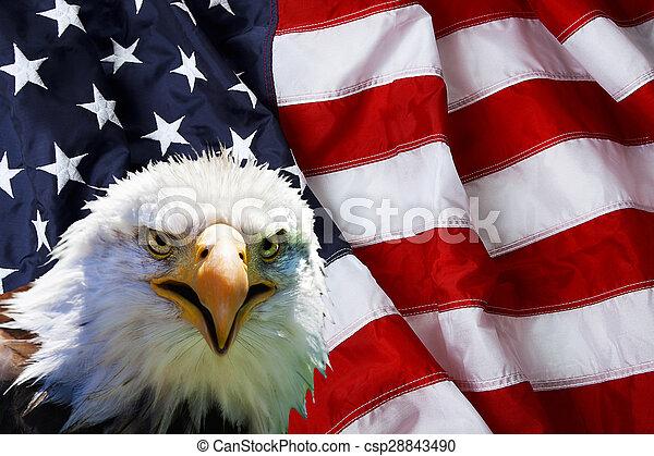 North American Bald Eagle on American flag - csp28843490