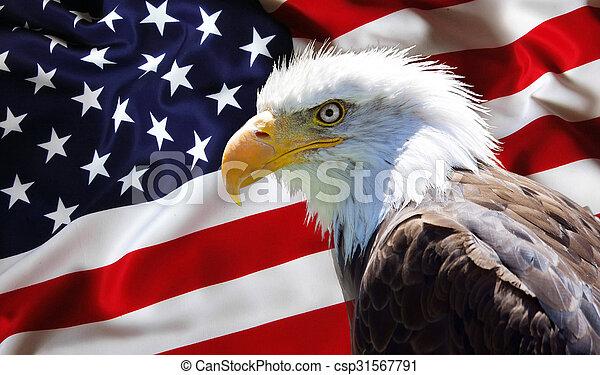 North American Bald Eagle on american flag - csp31567791