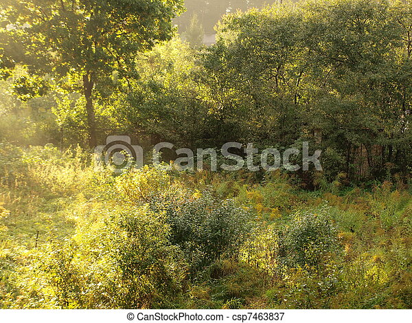 Overgrowth of bushes in sunlight - csp7463837