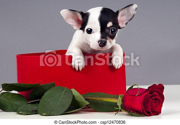 Puppy for present. - csp12470836