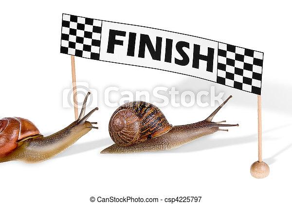 Racing snails - csp4225797