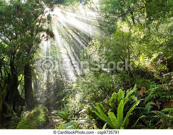 Rays of sunlight beam trough dense tropical jungle - csp9735791