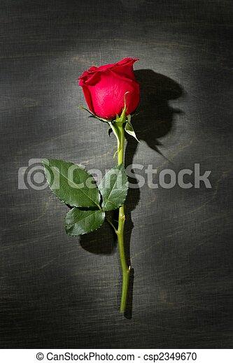 Red rose macro over dark black wood - csp2349670