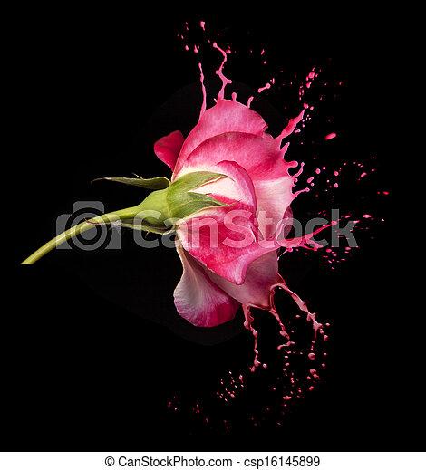 red rose splashes - csp16145899