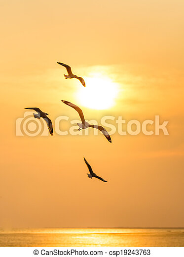 Seagull on sunset background - csp19243763