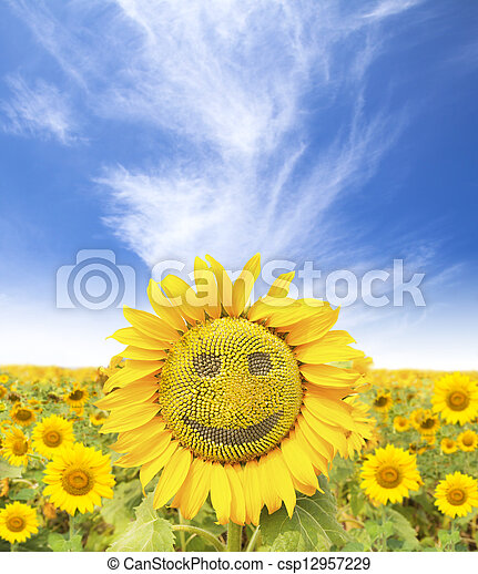smiling face of sunflower at summer time - csp12957229