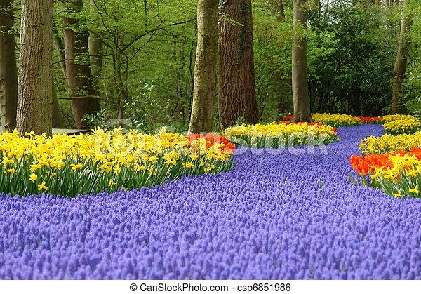 Spring flower bed in Keukenhof - csp6851986