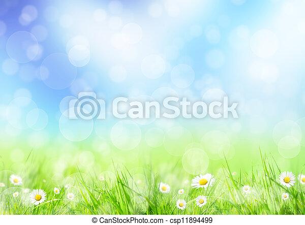 Spring meadow - csp11894499