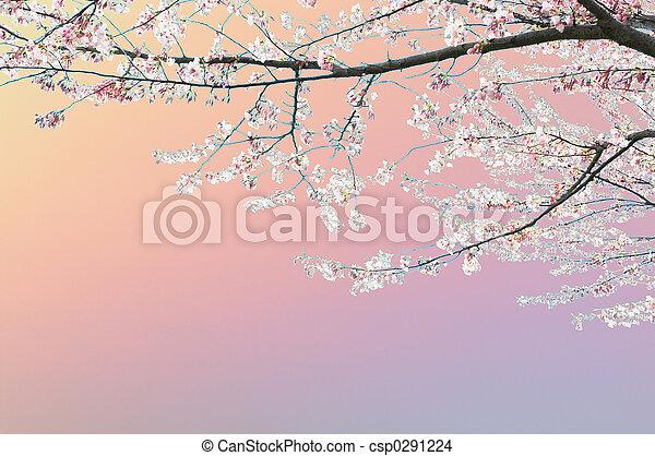 Spring Tree - csp0291224