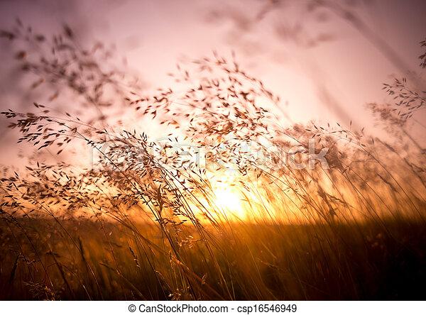 Summer Dry Grass - csp16546949