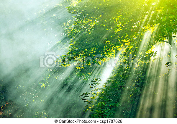 sunlight mist forest - csp1787626
