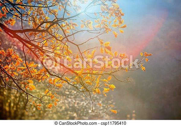 Sunlight yellow autumn tree in a park - csp11795410