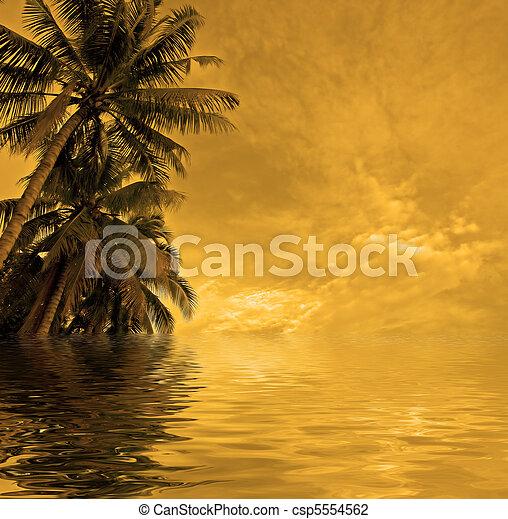 sunset beach - csp5554562