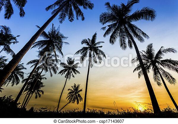 Sunset on the beach of caribbean sea - csp17143607
