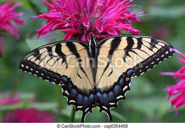 Swallowtail - csp0354458