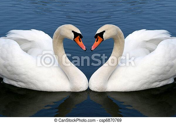 swan in love - csp6870769