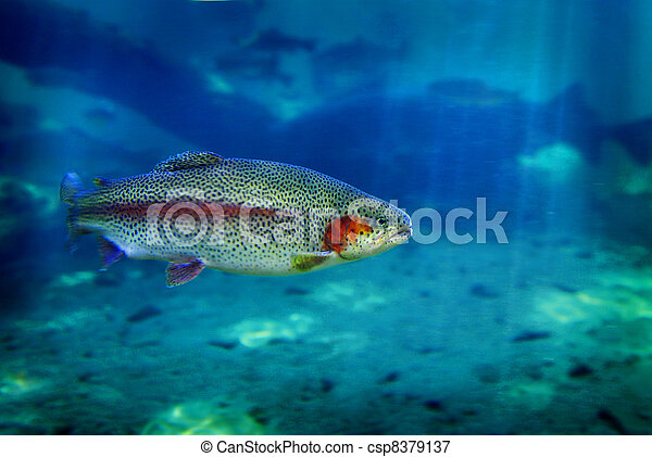 Trout Fish Swimming - csp8379137